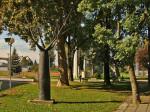 """Skulptura baobaba, """"Stablo"""", u parku uz plivalište """"Mladost"""" na Savi [GP 2013.]"""