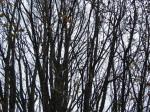 Gusto granje graba kod Baranovićeve ulice u Prečkom. Snimio: Vanja