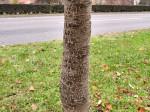 Još jedna nepoznanica – kora. Zna li netko koje je to drvo? Snimio: Vanja