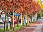 Crveni drvored kod tržnice Prečko. Snimio: Vanja