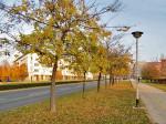 Meni nepoznato drvo kod Petrovaradinske ulice – javite mi ako znate kako se zove! Snimio: Vanja