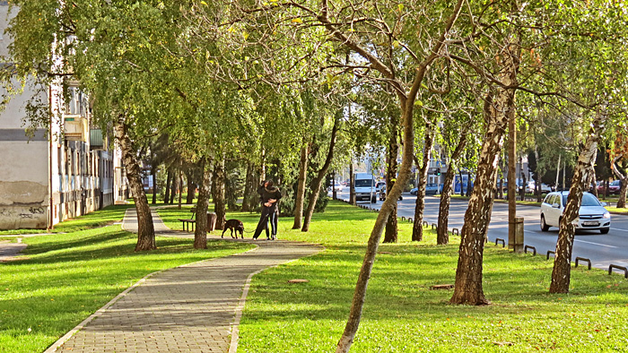 Zelena Trešnjevka