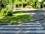 Zebra u Jarunskoj ulici koja završava u travi [VR 2014.]