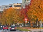 Pogled iz daljine na dio drvoreda kod Ulice Hrvatskog Sokola. Snimio: Vanja