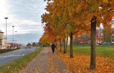 Šetnja najraznovrsnijim drvoredom u Zagrebu: Horvaćanska cesta