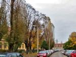 "Jablanovi ispred osnovne Škole ""Horvati"" na samom početku Horvaćanske ceste [VR 2013.]"