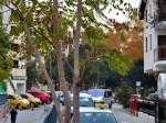 Stablo pajasena koje je probilo asfalt kod pješačkog pothodnika kod Tavankutske ulice. [VR 2013.]