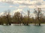 Preplavljen otočić na Malom jezeru Jaruna za vrijeme visoke vode Save [GP 2013.]