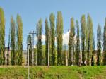 Drvored jablanova uz željezničku prugu prema Savskom mostu [GP.2013.]