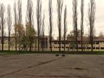 Drvored jablanova uz igralište osnovne škole na Selskoj cesti [GP 2014.]