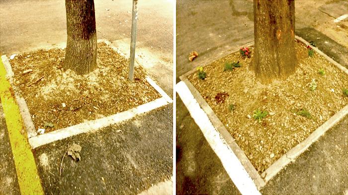 """Primjer inicijative """"Zasadi vrt! Uredimo Zagreb sami"""" (desna slika!) u Petračićevoj ulici [GP 2020.]"""