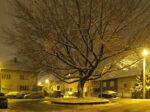 Kružni (o)tok u Postojnskoj ulici - stablo negundovca zimi [VR 2020.]